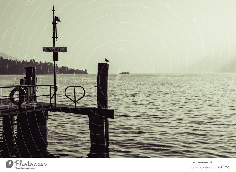 Steg mit Vogel Freizeit & Hobby dunkel See Seeufer Anlegestelle Gardasee Silhouette Holzpfahl Sehnsucht Fernweh Einsamkeit Romantik Idylle friedlich malerisch