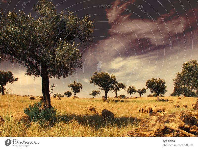Utopian Dream II Himmel Natur Ferien & Urlaub & Reisen grün schön Baum Pflanze Sonne Sommer Tier Einsamkeit Landschaft Wiese Leben Mauer träumen