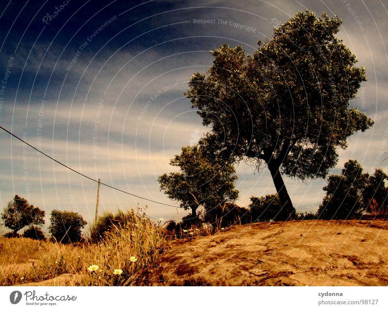Utopian Dream III Himmel Natur grün schön Baum Ferien & Urlaub & Reisen Pflanze Sonne Sommer Einsamkeit Landschaft Leben Wiese Wege & Pfade Mauer träumen