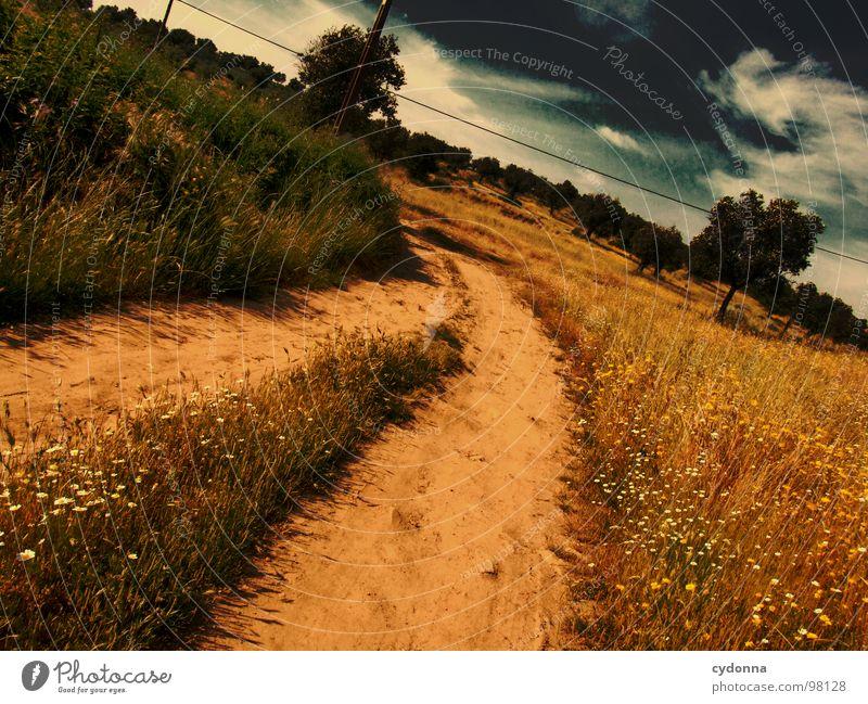 Utopian Dream IV Himmel Natur grün schön Baum Ferien & Urlaub & Reisen Pflanze Sommer Einsamkeit Landschaft Leben Wiese Gras Wege & Pfade Sand träumen