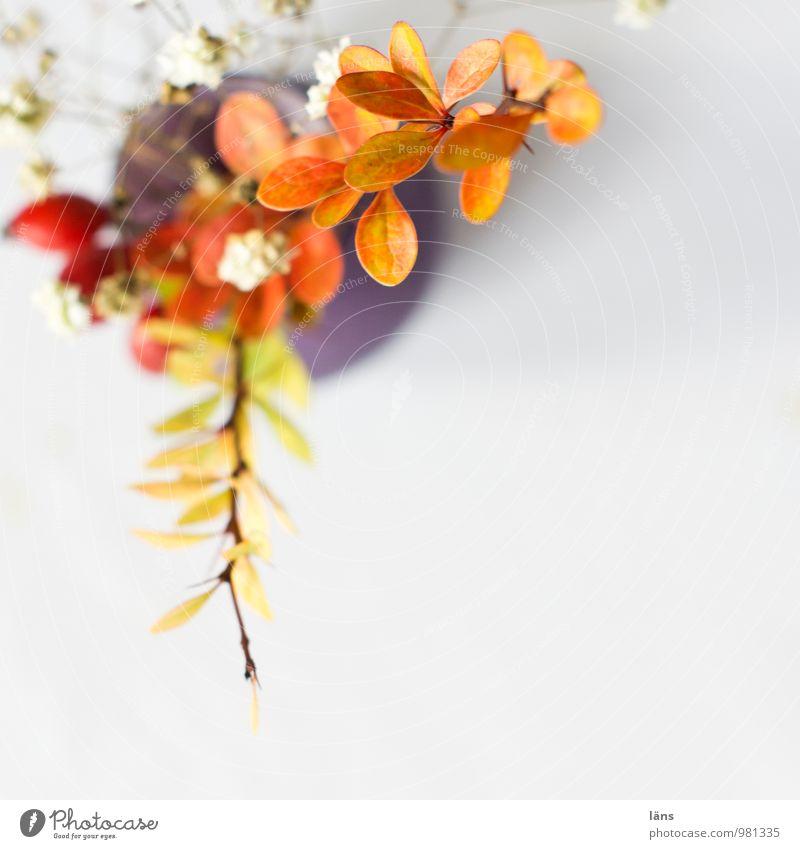 eckpunkt Häusliches Leben Dekoration & Verzierung Pflanze Blatt Blüte Wildpflanze Blühend ästhetisch einzigartig Berberitze Schleierkraut Vase Farbfoto