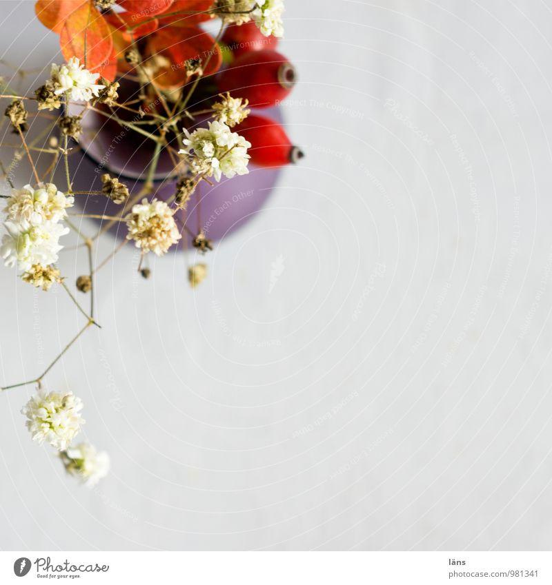 mittelpunkt Blume Dekoration & Verzierung Tisch Vase Hagebutten Schleierkraut Berberitze