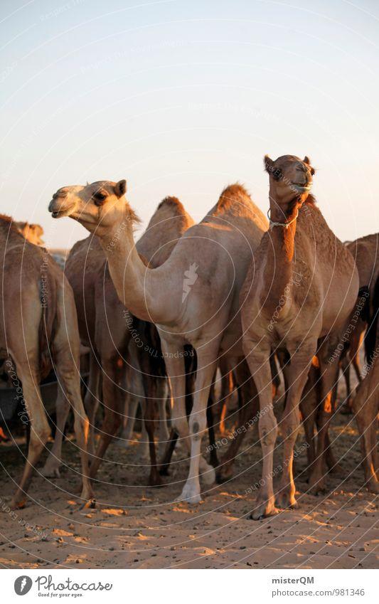 Desert Cab VII Kunst ästhetisch Kamel Kameltreiber Kamelhöcker Kamelmarkt Kamelkopf Wüste Oase Tier Herde Farbfoto Gedeckte Farben Außenaufnahme Experiment