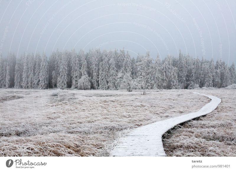 Weg in den Winterwunderwald Landschaft Wald ruhig Wege & Pfade ungewiss Zukunft Waldrand Holzweg Hoffnung Kurve Tanne Raureif Hohes Venn Moor Heide grau Nebel