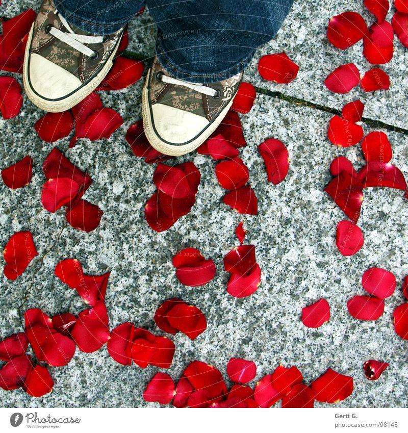 baccara Rose Rosenblätter Schuhe Bekleidung Chucks rot verteilen Tradition Ehe Asphalt Bauschutt Zerstörung kaputt hacken Geruch zart Glücksspiel Jeanshose