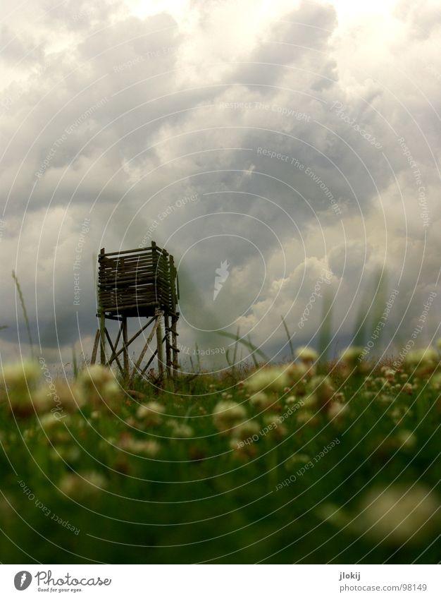 Hervorragend Hochsitz Froschperspektive Wolken ziehen gefährlich dunkel Jäger Klee Wiese unten Holz Wachstum Blüte Blume Pflanze Regen Gras grün Unschärfe Reh