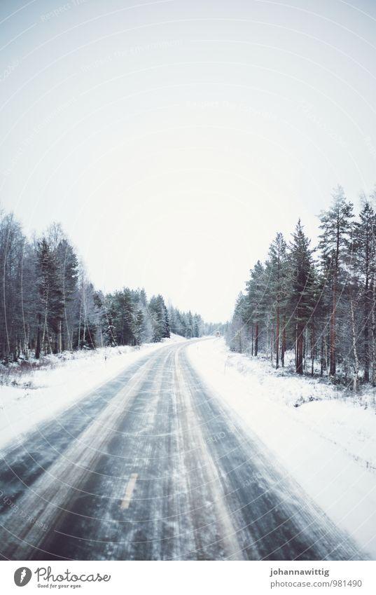 The wind would love to stay here with you. Natur weiß Baum ruhig Winter schwarz dunkel kalt Straße Schnee Wege & Pfade außergewöhnlich träumen Schneefall Eis