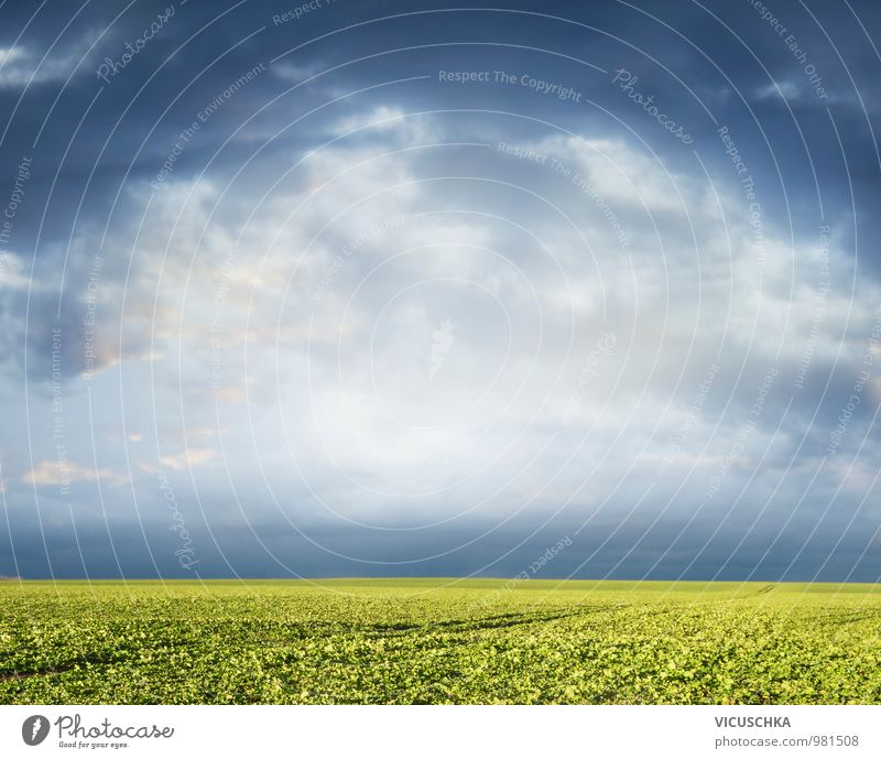 Grünes Feld und bewölkter Himmel Natur Pflanze Himmel (Jenseits) grün Sommer Sonne Landschaft Wolken Herbst Frühling Wiese Hintergrundbild springen Horizont