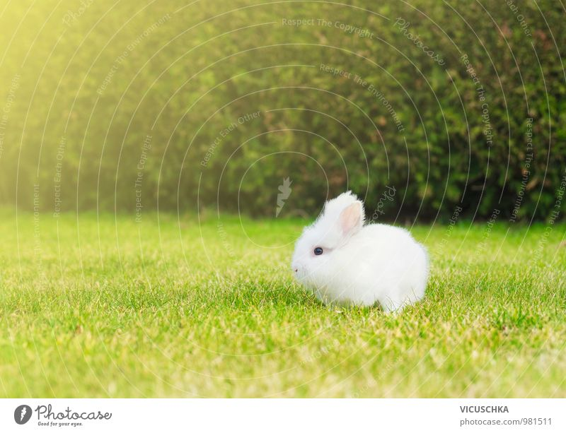 kleines weißes Häschen auf Rasen im Garten Natur Pflanze weiß Sommer Tier Wiese Gras Frühling Stil Garten springen Park Freizeit & Hobby Baby Schönes Wetter Rasen