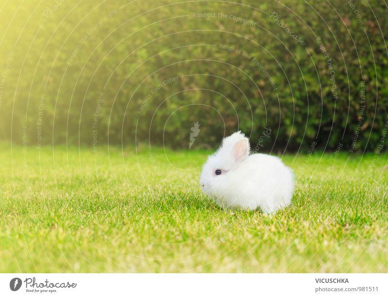 kleines weißes Häschen auf Rasen im Garten Stil Freizeit & Hobby Sommer Baby Natur Pflanze Tier Frühling Schönes Wetter Park Wiese Haustier Nutztier 1 springen