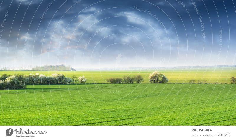 Frühling Feld Landschaft mit fblühenden Kirschen Design Natur Pflanze Urelemente Himmel Wolken Gewitterwolken Horizont Sommer Schönes Wetter Wiese springen