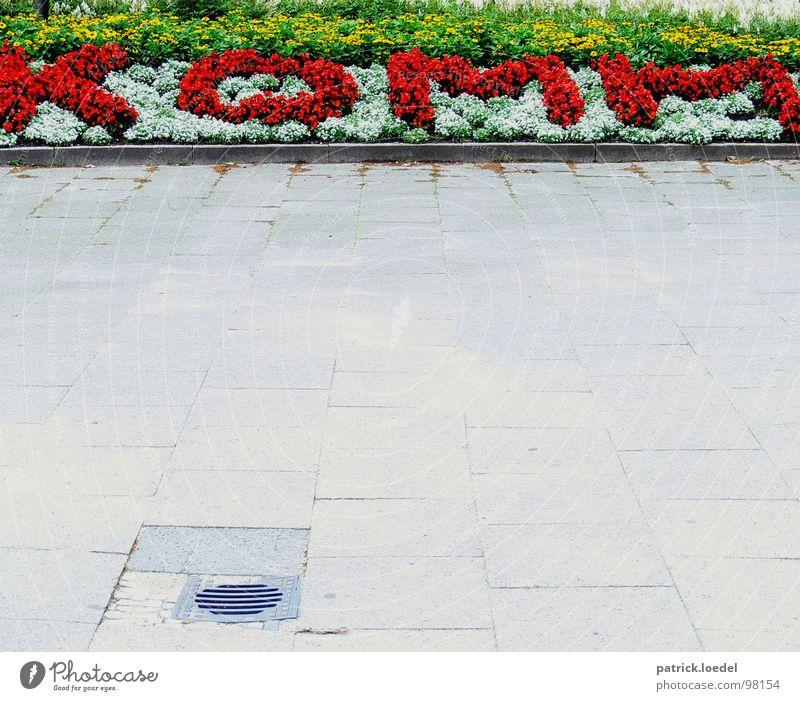 Sag's durch die Blume grün rot Pflanze Sommer Landschaft Garten Wege & Pfade Frühling hell Buchstaben Kommunizieren einfach Blühend Typographie Duft