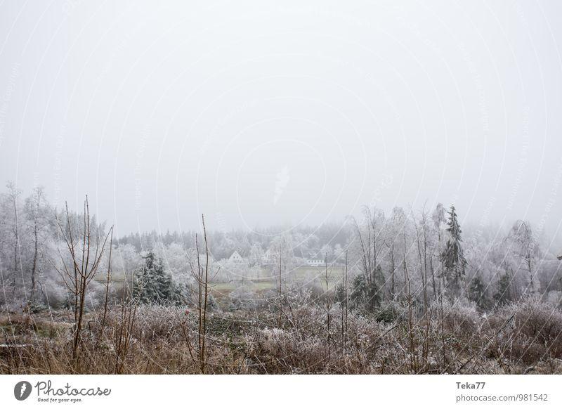 Raureifland Winter Umwelt Natur Landschaft Eis Frost Hagel Schnee Wiese Feld Wald Hügel ästhetisch Coolness Farbfoto Gedeckte Farben Außenaufnahme Menschenleer