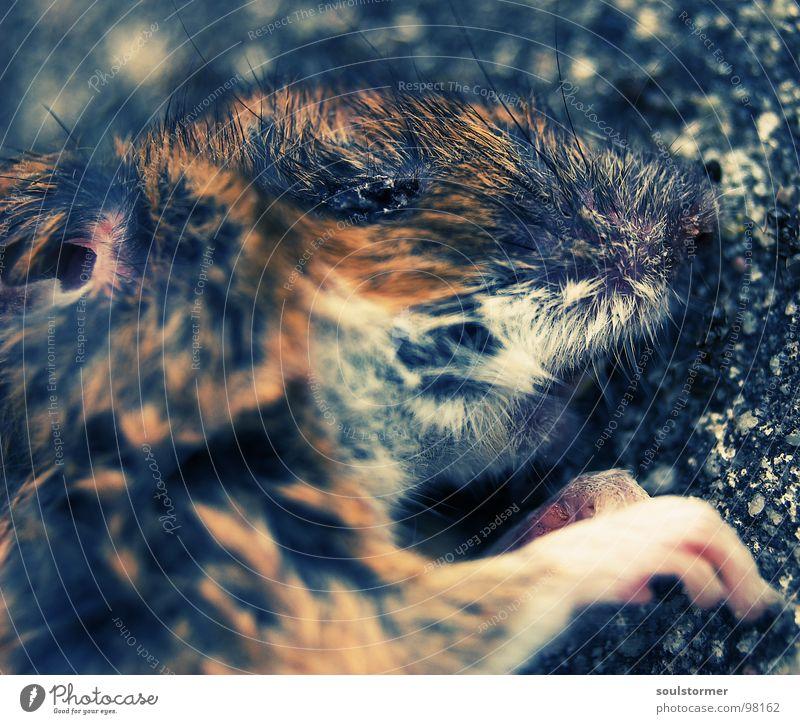 Katzenfutter - Die Front Tier Auge Tod Leben Haare & Frisuren klein Nase nass Ernährung niedlich Vergänglichkeit Ohr Fell Maus Pfote Säugetier