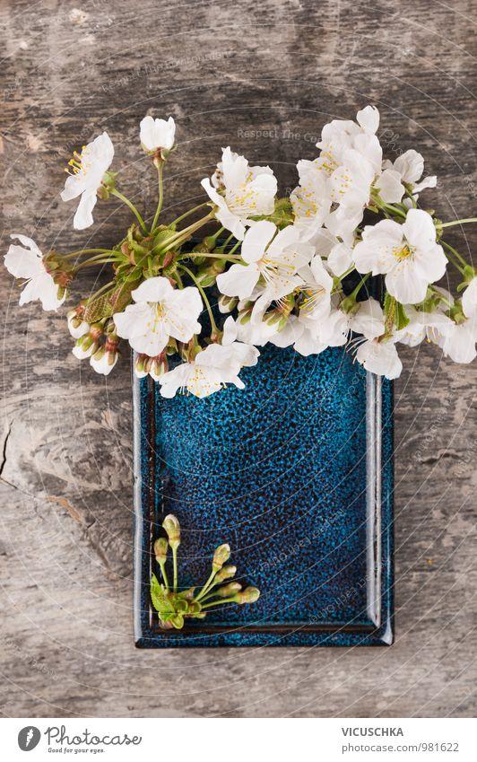 Blaue Keramik Schale mit weißen Kirschblüten Stil Design Garten Dekoration & Verzierung Natur Pflanze Frühling Blüte Blühend retro Duft Rahmen Hintergrundbild