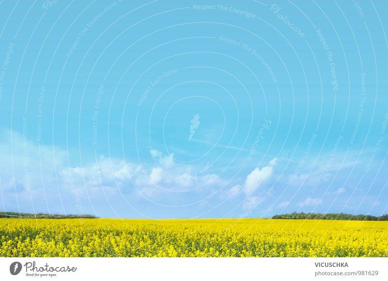 Raps Feld unter dem blauen Himmel Natur Pflanze Sommer Landschaft gelb Frühling Hintergrundbild Garten Lebensmittel Horizont Lifestyle Design Schönes Wetter