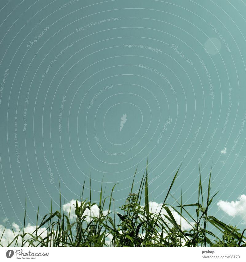 Fake Leuchte für Carlitos Natur Himmel Sonne grün blau Pflanze Sommer Freude Wolken Ferne Gras See Küste frei Schilfrohr Schönes Wetter