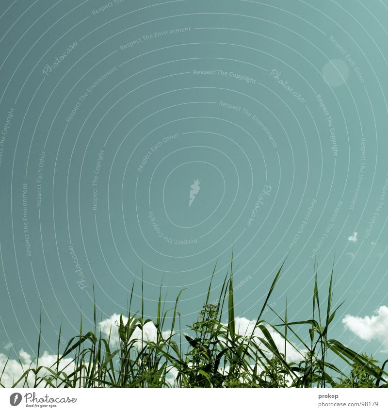 Fake Leuchte für Carlitos Wolken Gras Schilfrohr falsch Himmel Altokumulus floccus grün See Sommer Freude Sonne betrügen frei Ferne Firmament Schönes Wetter