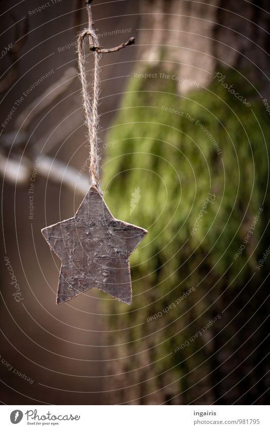 Sternchen am Ästchen Natur Weihnachten & Advent Pflanze grün Baum ruhig Wald Traurigkeit natürlich Holz braun Stimmung Park Ast Stern (Symbol) Baumstamm