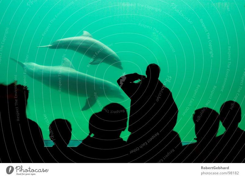 together Delphine grün Valencia Aquarium Säugetier Schulklasse Bildung Wachsamkeit Menschengruppe Silhouette Fisch mama und kind Wasser oceanarium