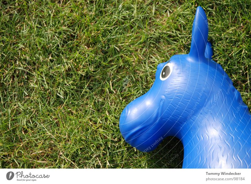 Blauschimmel blau grün Sommer Freude Auge Wiese Gras Spielen Rasen Kunststoff Pferd Spielzeug Halm Statue hüpfen Gummi