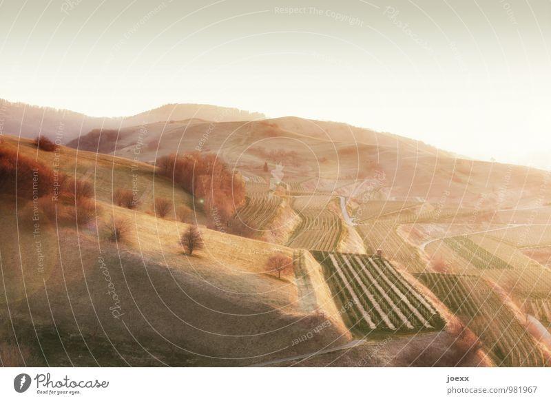 Sonnen-Terassen Landschaft Wolkenloser Himmel Horizont Frühling Herbst Schönes Wetter Baum Feld Berge u. Gebirge groß hell schön braun grün Idylle Ordnung