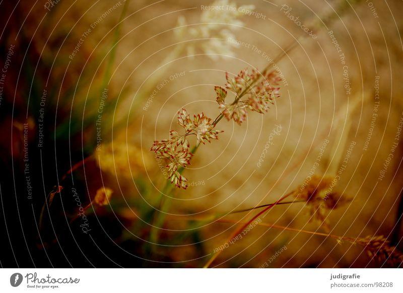 Gras grün schön Pflanze Sommer Farbe Wiese glänzend weich zart Weide Stengel Halm sanft beweglich Pollen