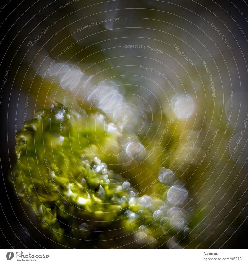 Moos Wasser grün Pflanze Leben klein Regen glänzend nass Wassertropfen Urwald feucht Mikrofotografie winzig