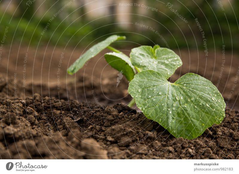 urban gardening Pflanze Blatt Gesunde Ernährung Leben Blüte Gesundheit Garten Lebensmittel Lifestyle Wohnung Freizeit & Hobby Wachstum Häusliches Leben
