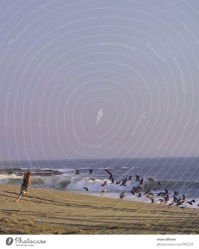 husch, husch Frau Wasser Meer Strand Freiheit Küste laufen fliegen Möwe
