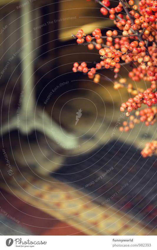 winterberry Pflanze Stechpalme Ilex Beeren rot Seite Zweige u. Äste Dekoration & Verzierung Blumenstrauß Winter Lifestyle Häusliches Leben Schmuck