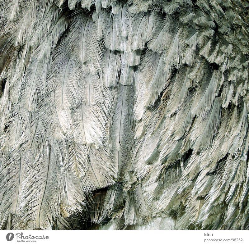 FEDER(ge)WAND Natur weiß Tier Wärme grau Vogel Wildtier wild Dekoration & Verzierung Feder Flügel viele Schutz Zoo hängen leicht