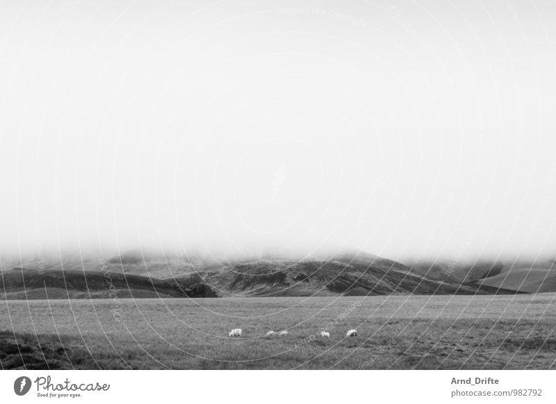 Island Himmel Natur Ferien & Urlaub & Reisen Landschaft Wolken Ferne Berge u. Gebirge Wiese Felsen Feld Erde Tourismus wandern Ausflug Tiergruppe Urelemente