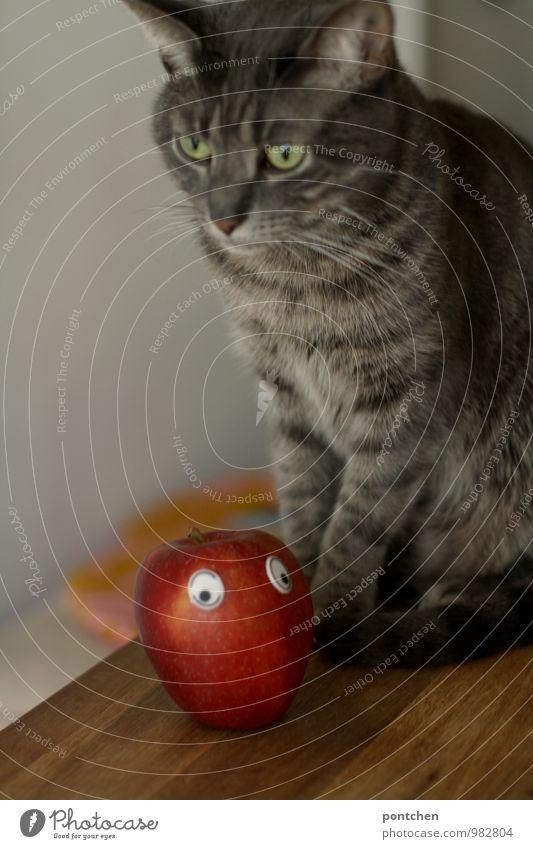 Katze mit ernstem Gesicht sitzt auf einem Tisch. Vor ihr liegt ein Apfel mit wackeligen. Unfreiwilliger Vegetarier Tier Haustier 1 sitzen Vegane Ernährung