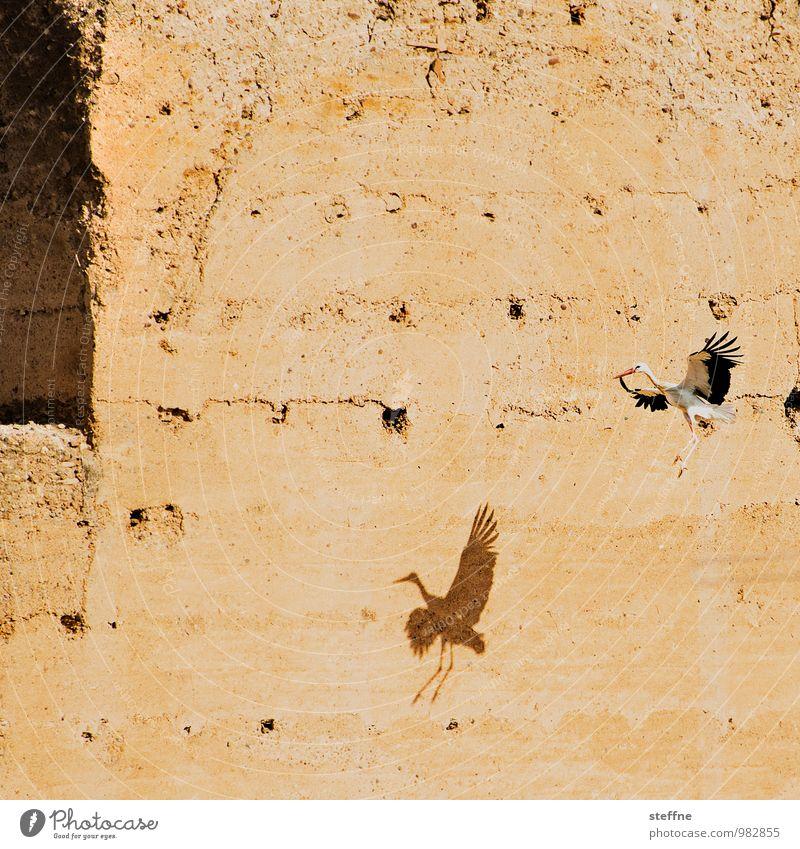 Tierisch gut: Archeopterstorch Sonnenaufgang Sonnenuntergang Schönes Wetter Vogel 1 außergewöhnlich Marokko Marrakesch Storch Feder Farbfoto Außenaufnahme