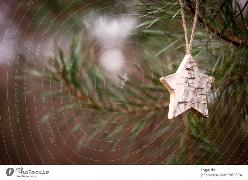 Natursternchen Weihnachten & Advent Pflanze Baum Zweige u. Äste Kiefer Tannenzweig Nadelbaum Wald hängen natürlich braun grau grün Gefühle Stimmung ruhig Glaube