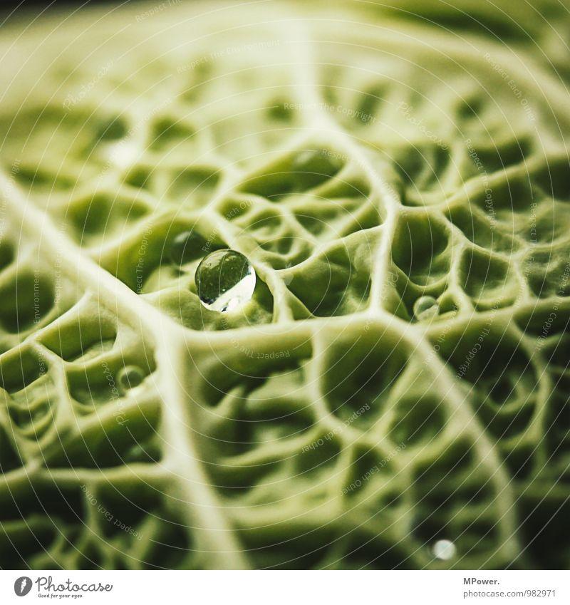 Wirsing III Lebensmittel Ernährung Bioprodukte Vegetarische Ernährung lecker Gemüse Gesunde Ernährung Gesundheit Gefäße Strukturen & Formen grün vitaminreich