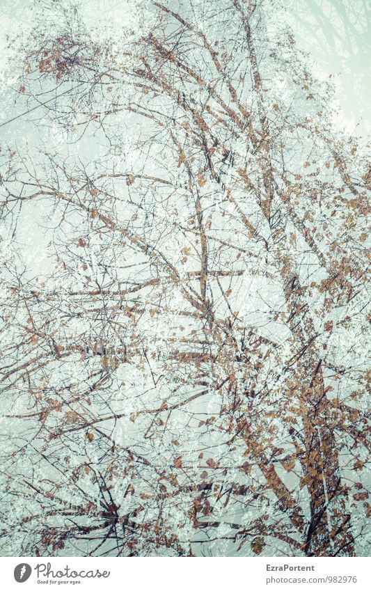 Birke,Birke Natur Landschaft Pflanze Himmel Herbst Baum Wald ästhetisch blau braun Doppelbelichtung leuchten Blatt Ast Baumstamm Farbfoto Gedeckte Farben