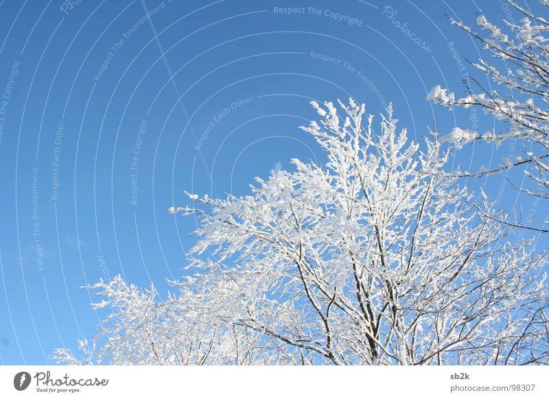Ab in den Süden Kondensstreifen Baum kalt weiß Horizont Winter Wolken Strahlung strahlend himmelblau dunkel Linie Freundlichkeit Freude schön Wasserkuppe