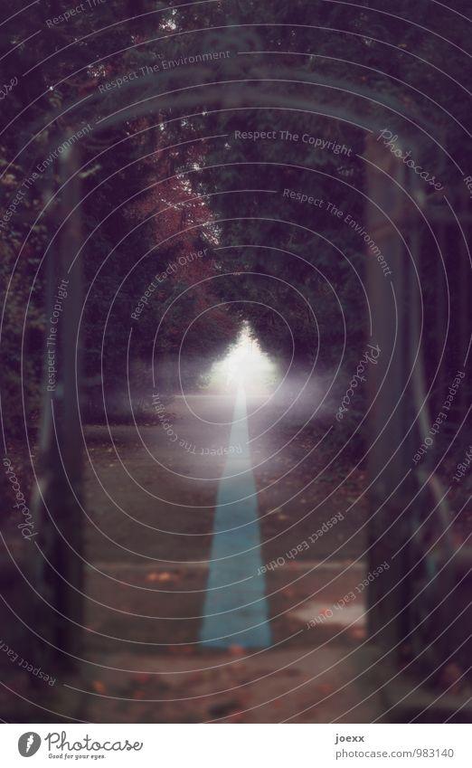 Herbst Nebel Baum Park Tür alt dunkel gruselig grün weiß ruhig träumen Müdigkeit Senior Ende Erfahrung Hoffnung Idylle Religion & Glaube Tod Wege & Pfade Ziel