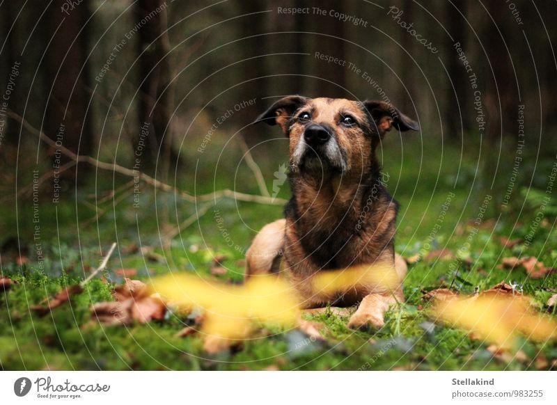 Waldzauber Hund Natur grün ruhig Tier schwarz gelb Herbst natürlich braun Stimmung Fell Haustier Moos verträumt