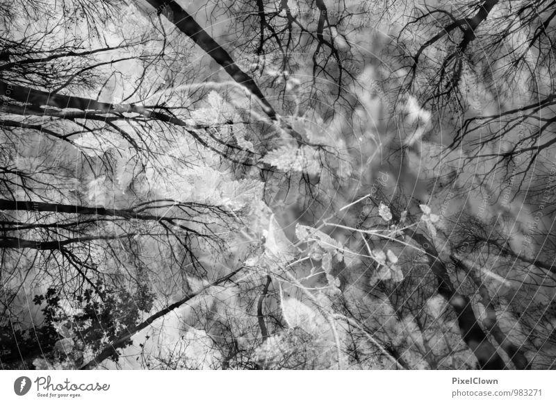 mystisch Himmel Natur Pflanze weiß Baum Einsamkeit Blatt Landschaft schwarz dunkel Wald Gefühle Holz außergewöhnlich Stimmung Kunst