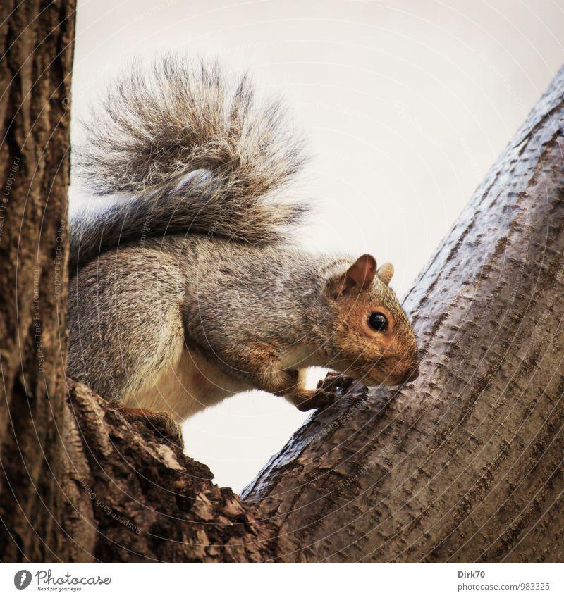 Was gibt's denn da unten? Baum Wolken Tier schwarz Wald grau Holz klein braun Park Wildtier sitzen frei niedlich Ast Neugier