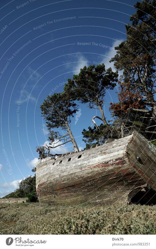 Left me stranded ... Ferien & Urlaub & Reisen Sommerurlaub Meer Himmel Wolken Sonnenlicht Schönes Wetter Baum Kiefer Pinie Wald Küste Bucht Atlantik Le Conquet