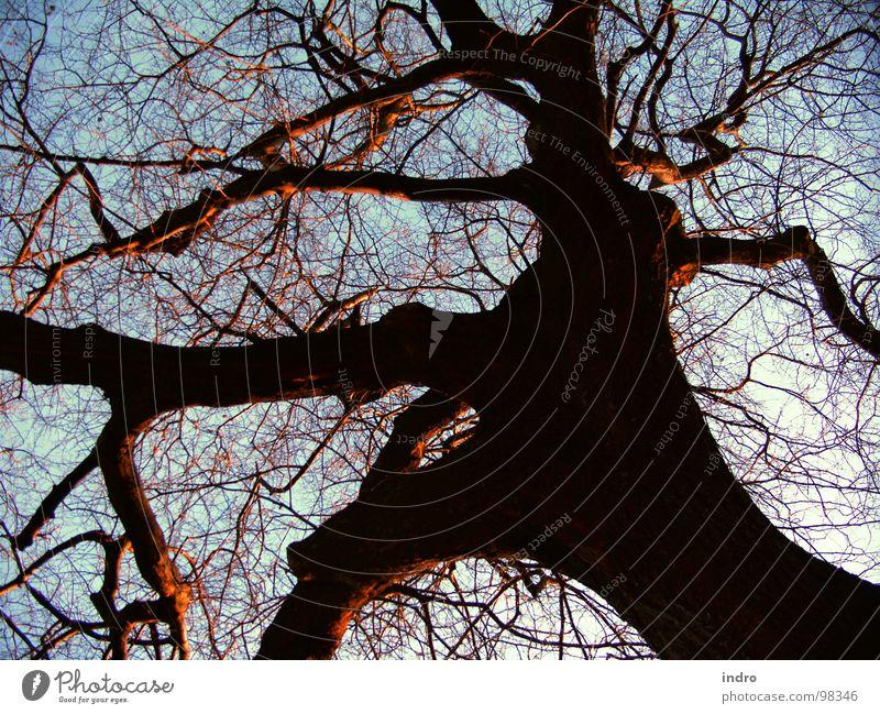 gewachsen Natur alt Baum Winter Kraft Wachstum