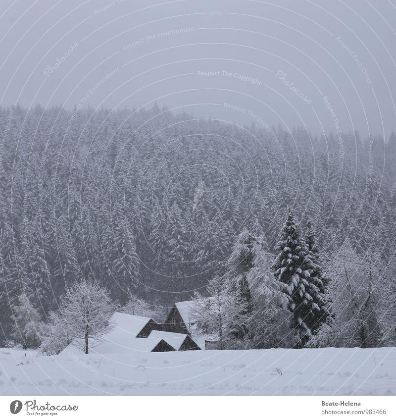 Bilderbuchwinter Natur weiß Baum Erholung Landschaft ruhig Haus Winter Wald schwarz kalt Schnee Schneefall Zufriedenheit Eis wandern