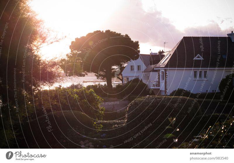 Coastal Cottage Ferien & Urlaub & Reisen Pflanze Sommer Baum Erholung Meer Haus Garten Park Häusliches Leben Zufriedenheit Sträucher einzigartig Reichtum