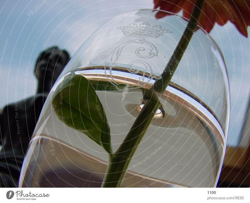 Glas mit Blume Licht Wasser