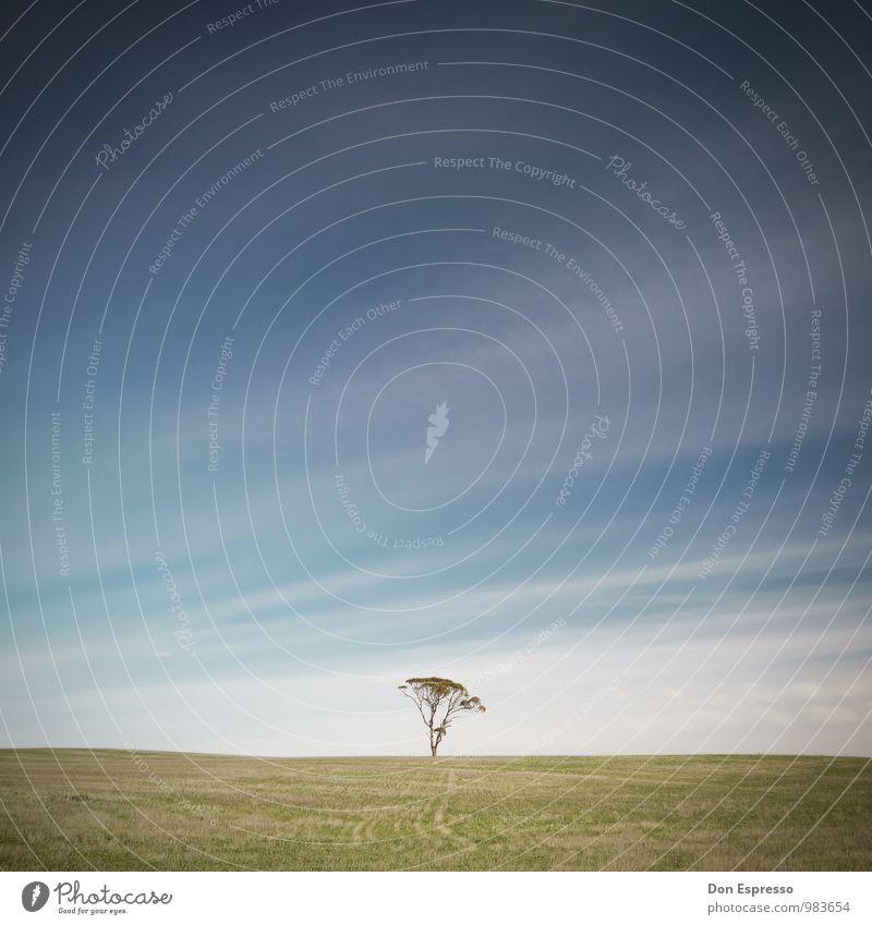 Zen Himmel blau grün Sommer Baum Einsamkeit Wolken ruhig Ferne Wiese Freiheit Stimmung Zufriedenheit frei einfach Unendlichkeit