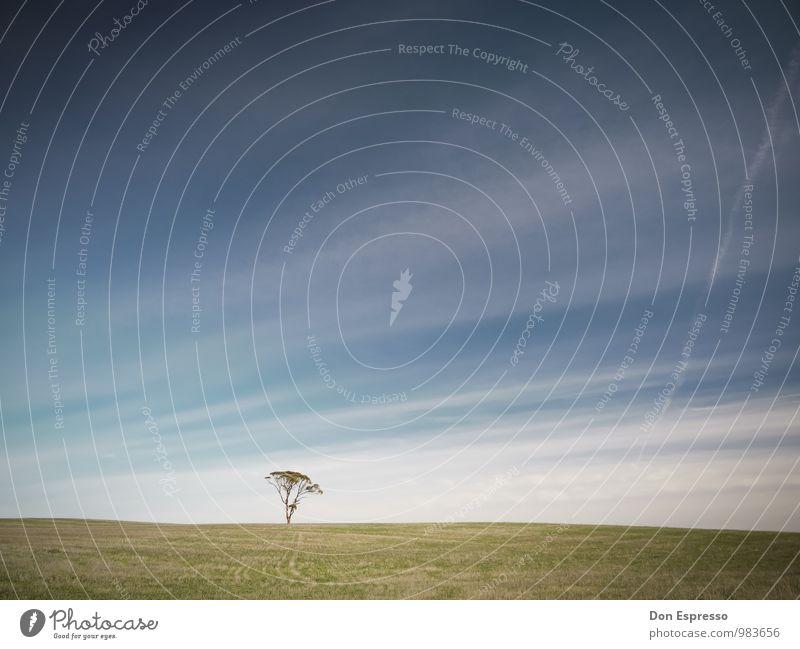 Zen II Himmel Baum Einsamkeit ruhig Wiese Linie Meditation